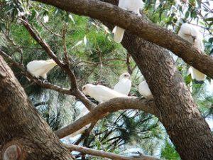 Birds in a bush